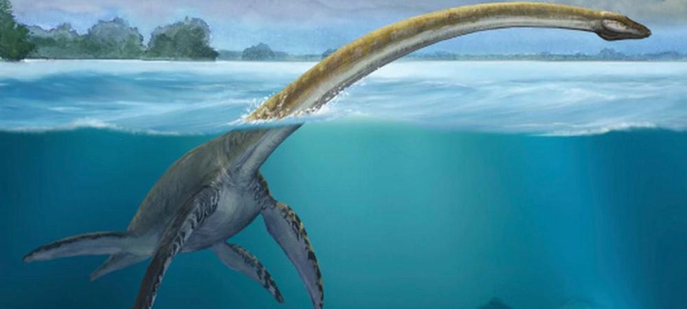Morro solar de Chorrillos es protagonista del primer hallazgo de un Plesiosaurio