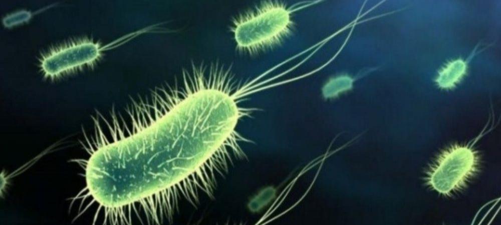 Científicos reviven microbios prehistóricos del fondo del mar
